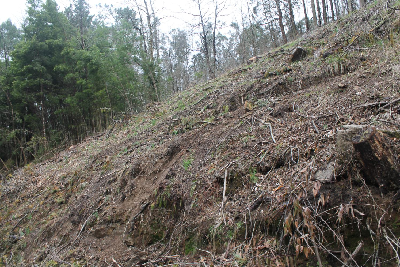 riberia da pena bosques 17 2