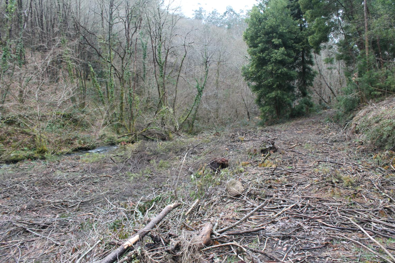 riberia da pena bosques 17 3