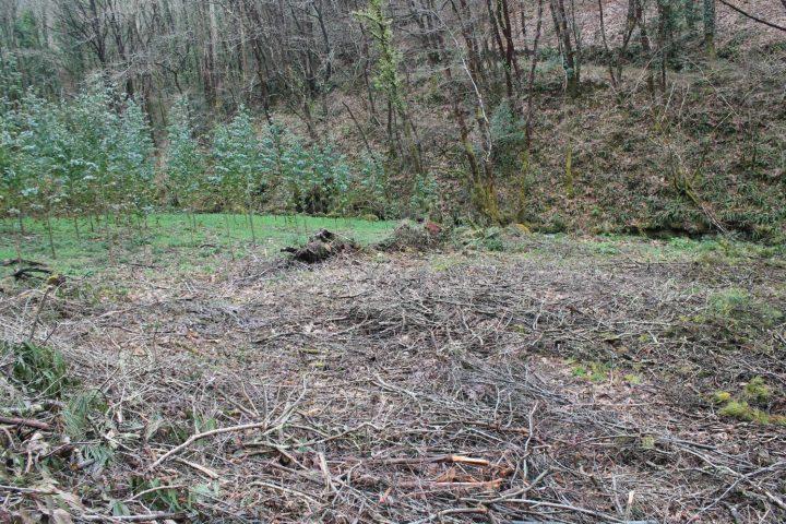 riberia da pena bosques 17